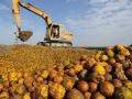新鮮柳丁作堆肥