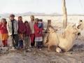 駱駝為運輸工具