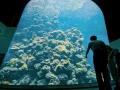 海生館珊瑚王國館