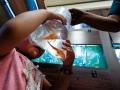 琵琶鼠魚幼生
