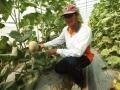 溫室直立式栽培