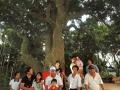 四百年荔枝老樹