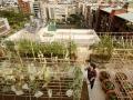 公寓大廈頂樓種植蔬菜