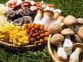 鮮菇品種日益多元