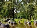 太陽能板融入造景的生態池