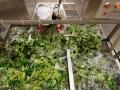 氣泡式洗菜機