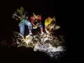 觀察陸蟹產卵