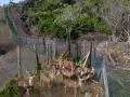 屏東社頂公園復育區的梅花鹿