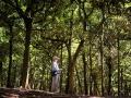社頂公園的毛柿林