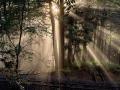 阿里山森林浴步道
