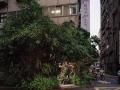 泰順寓所種滿了各種綠色植栽