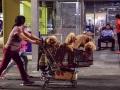 購物推車推著一群毛孩子