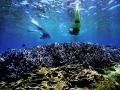 水下「薰衣草森林」