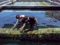 新北市海洋資源復育園區進行珊瑚復育