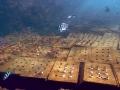 海洋花園珊瑚植栽