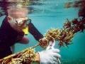 垂吊式種植珊瑚