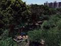 焚燒竹廢料
