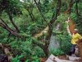 溼地植物生態池