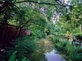 水生植物因棲地銳減而消失
