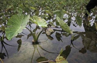水力與灌溉